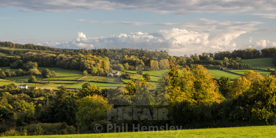 """Little Haldon Heath - Autumn evening"" stock image"