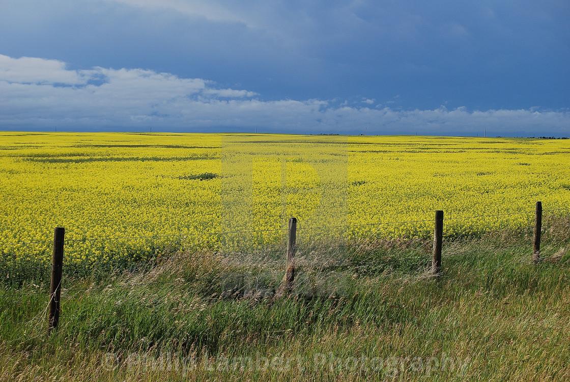 """Canadian Farmer Field"" stock image"