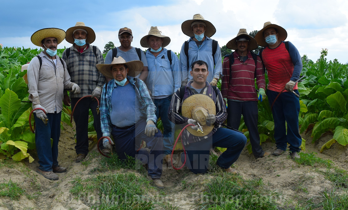"""""""Tobacco Workers"""" stock image"""