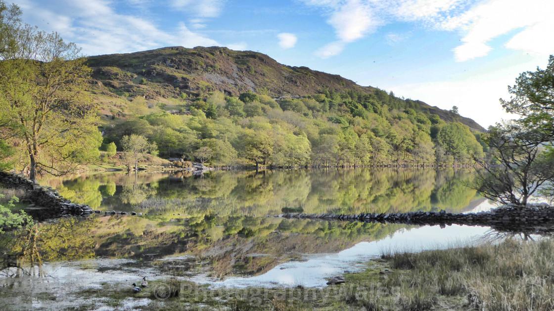 """""""Llyn Cynwch, near Llanfachreth"""" stock image"""