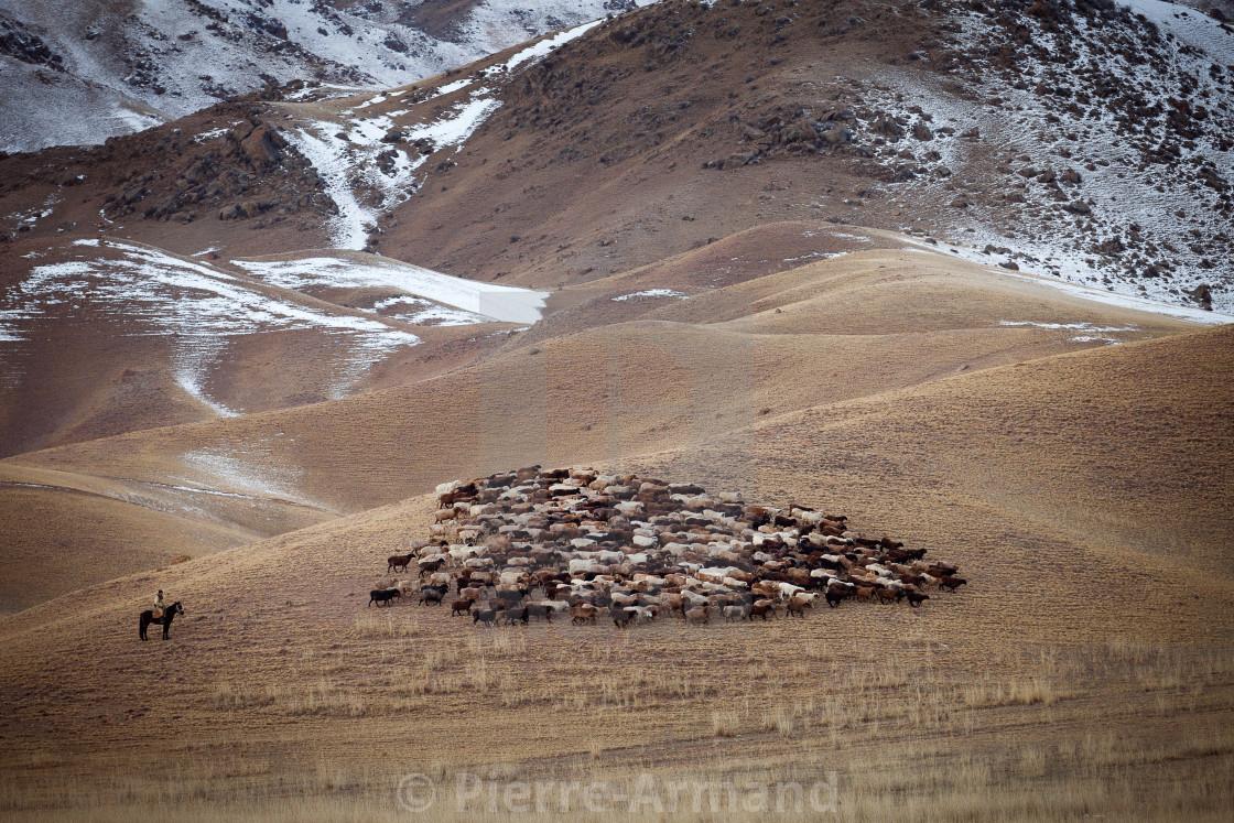 """Sheep and their shepherd"" stock image"