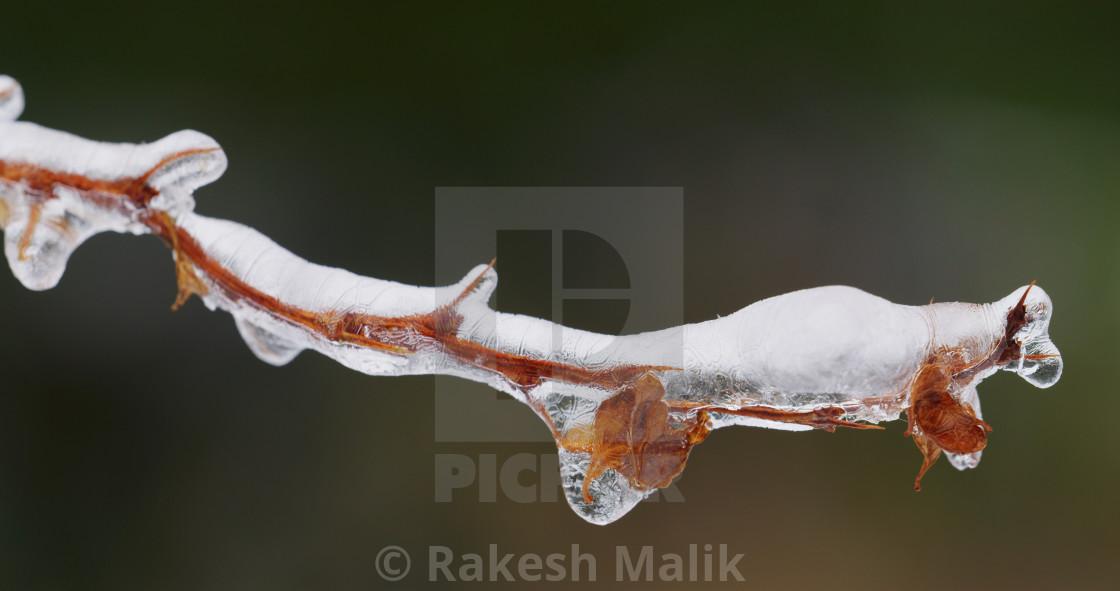 """Frozen Branch"" stock image"