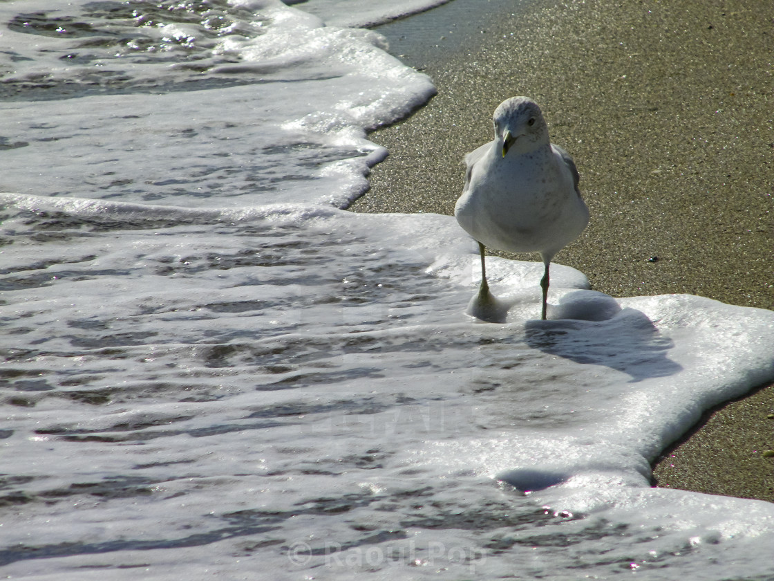 """""""Walking in the foam"""" stock image"""