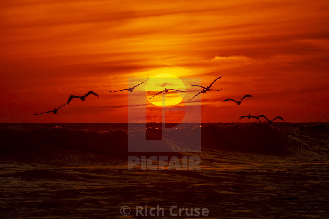 """""""Pelicans at Sunset in Oceanside, California"""" stock image"""