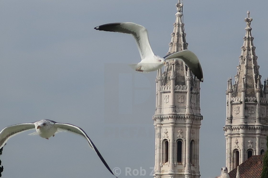 """""""Seagulls flying past a tower"""" stock image"""