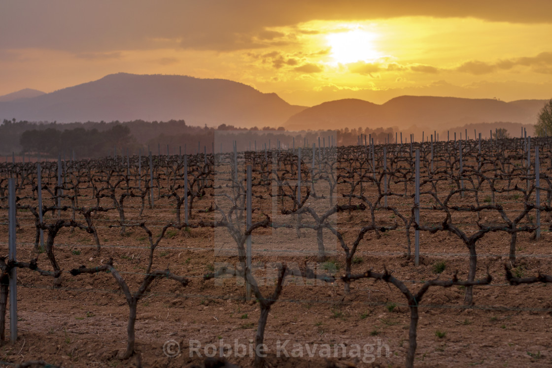 """Sunset over a vineyard, Penedès, Catalonia"" stock image"