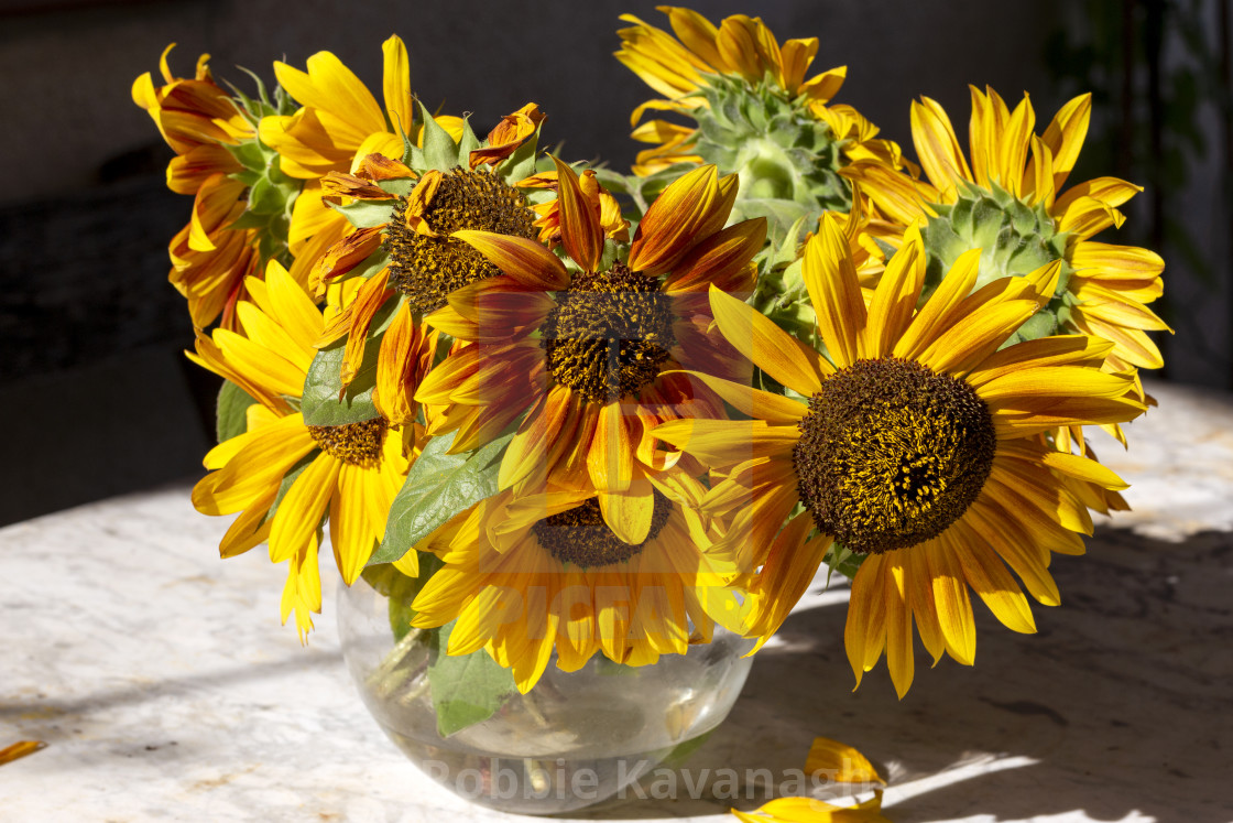 """""""Bunch of sunflowers in a vase"""" stock image"""