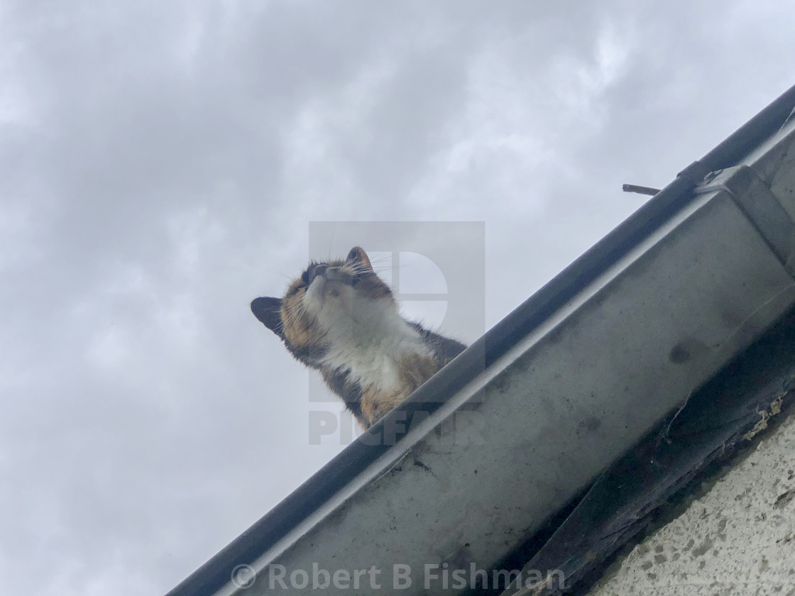 """""""cat on a roof"""" stock image"""