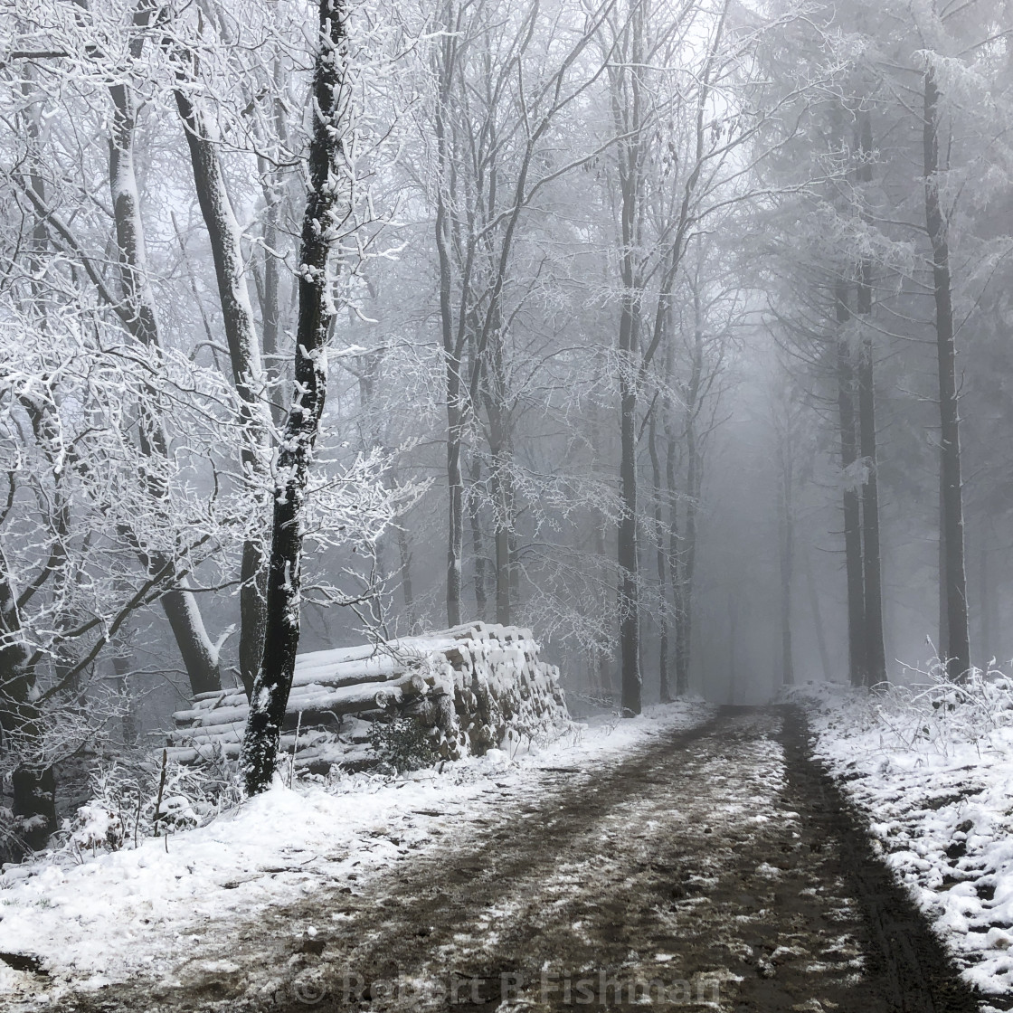 """""""Winter in Teutoburger Wald Forest"""" stock image"""