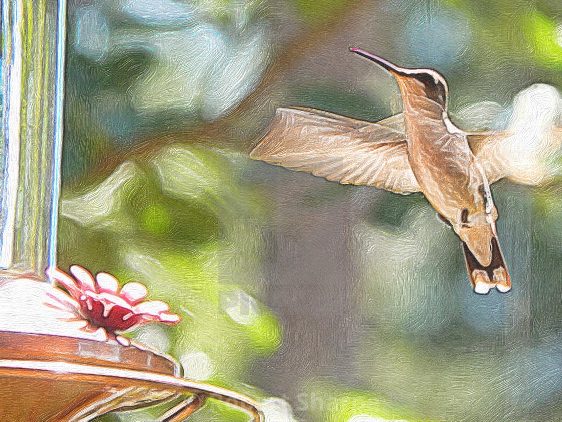 """PhotoArt of Hummingbird"" stock image"