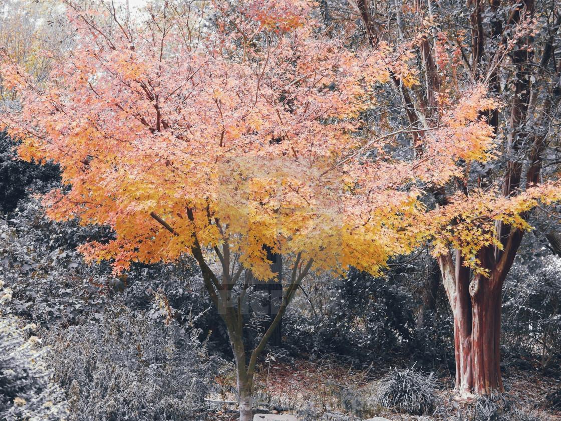 """Golden Tree"" stock image"