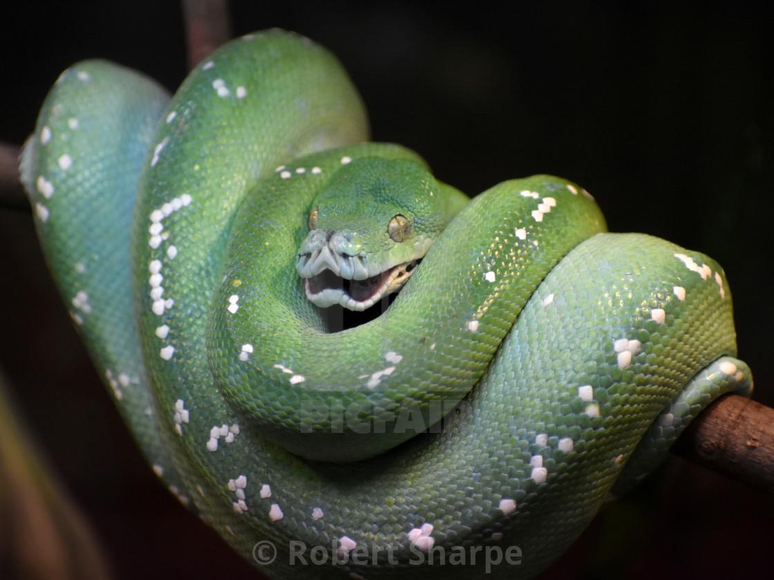 """""""Green Snake"""" stock image"""