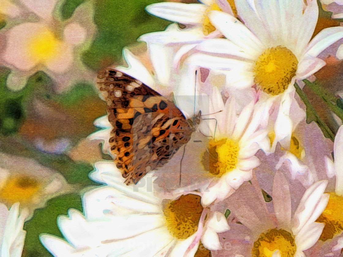 """""""Butterfly and Daisies"""" stock image"""
