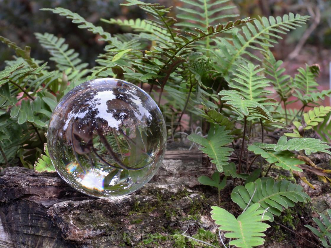 """""""Crystal Ball among Ferns"""" stock image"""