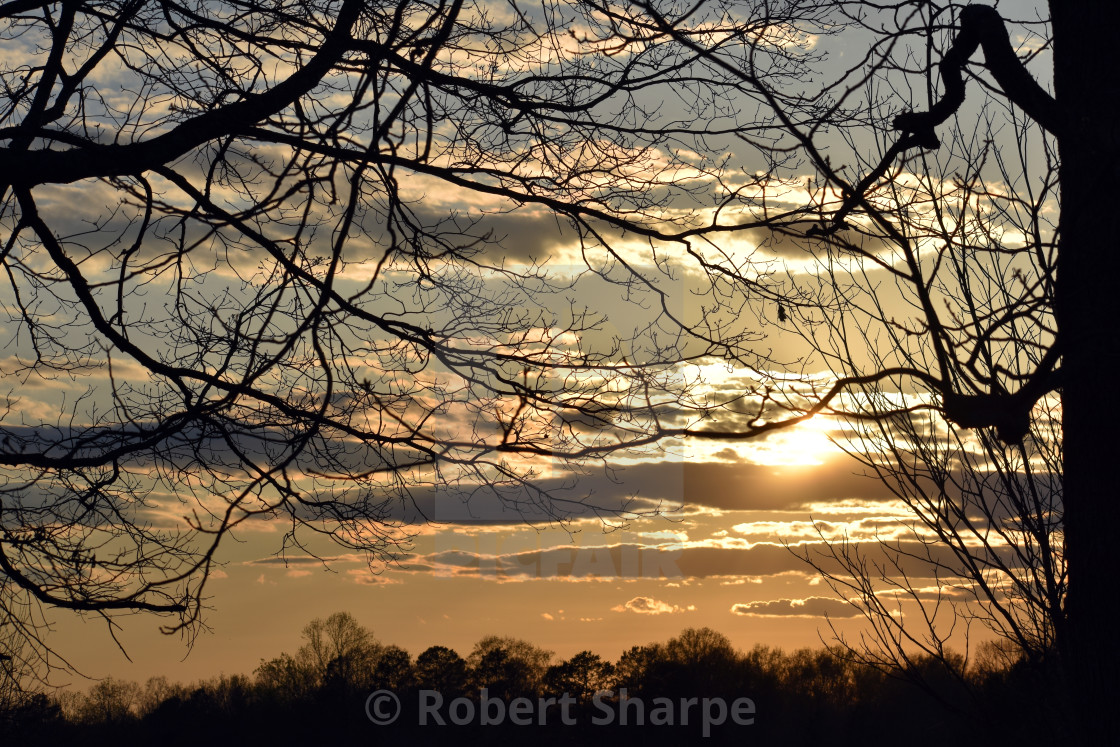 """""""Sunset Through the Trees"""" stock image"""