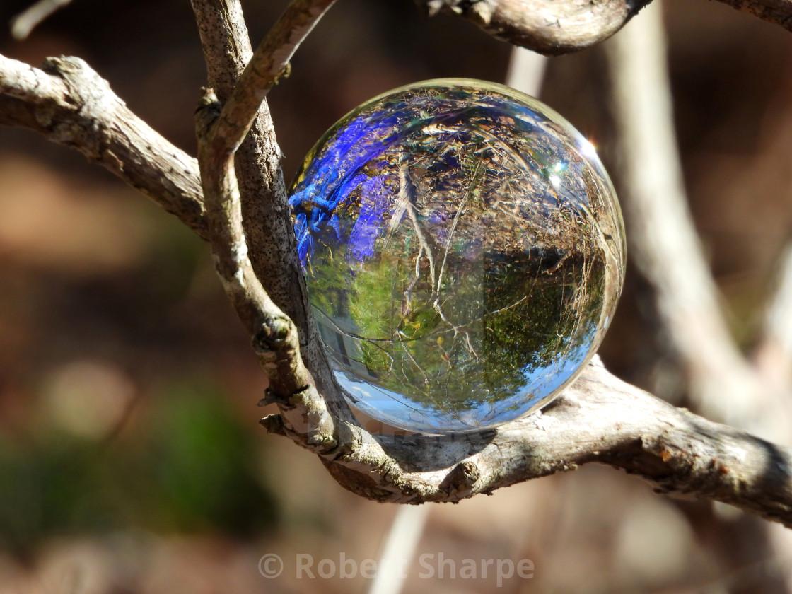 """Crystal Ball on a Tree Limb"" stock image"