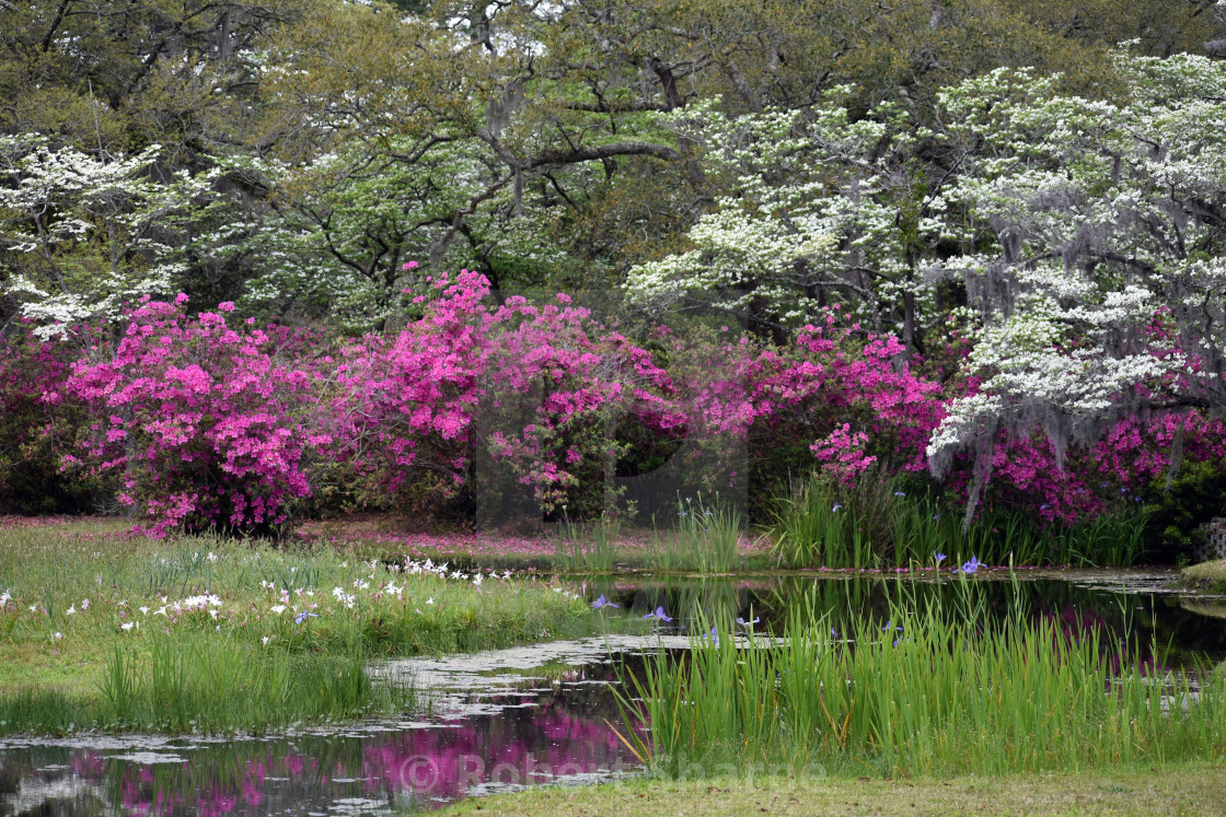 """""""Spring at the Pond"""" stock image"""