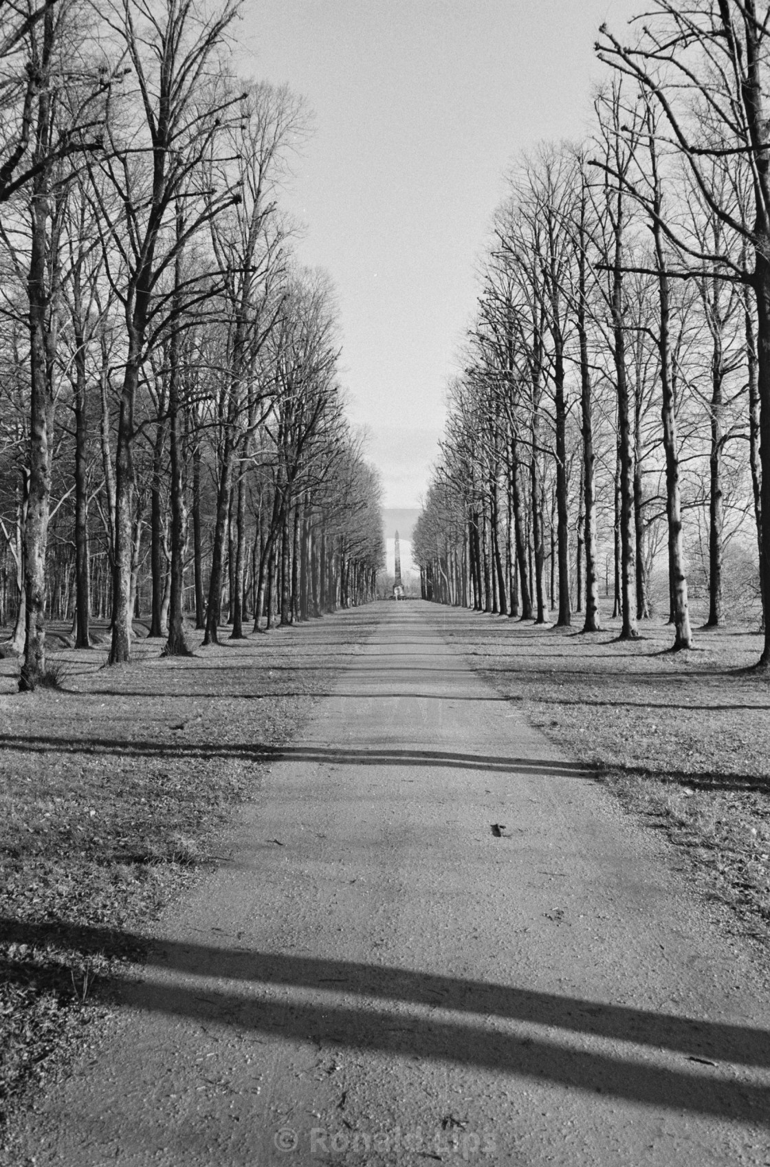 """""""Lane of trees in Soest (Netherlands)"""" stock image"""
