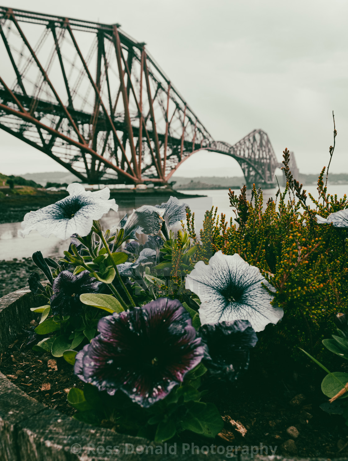 """Forth Bridge"" stock image"