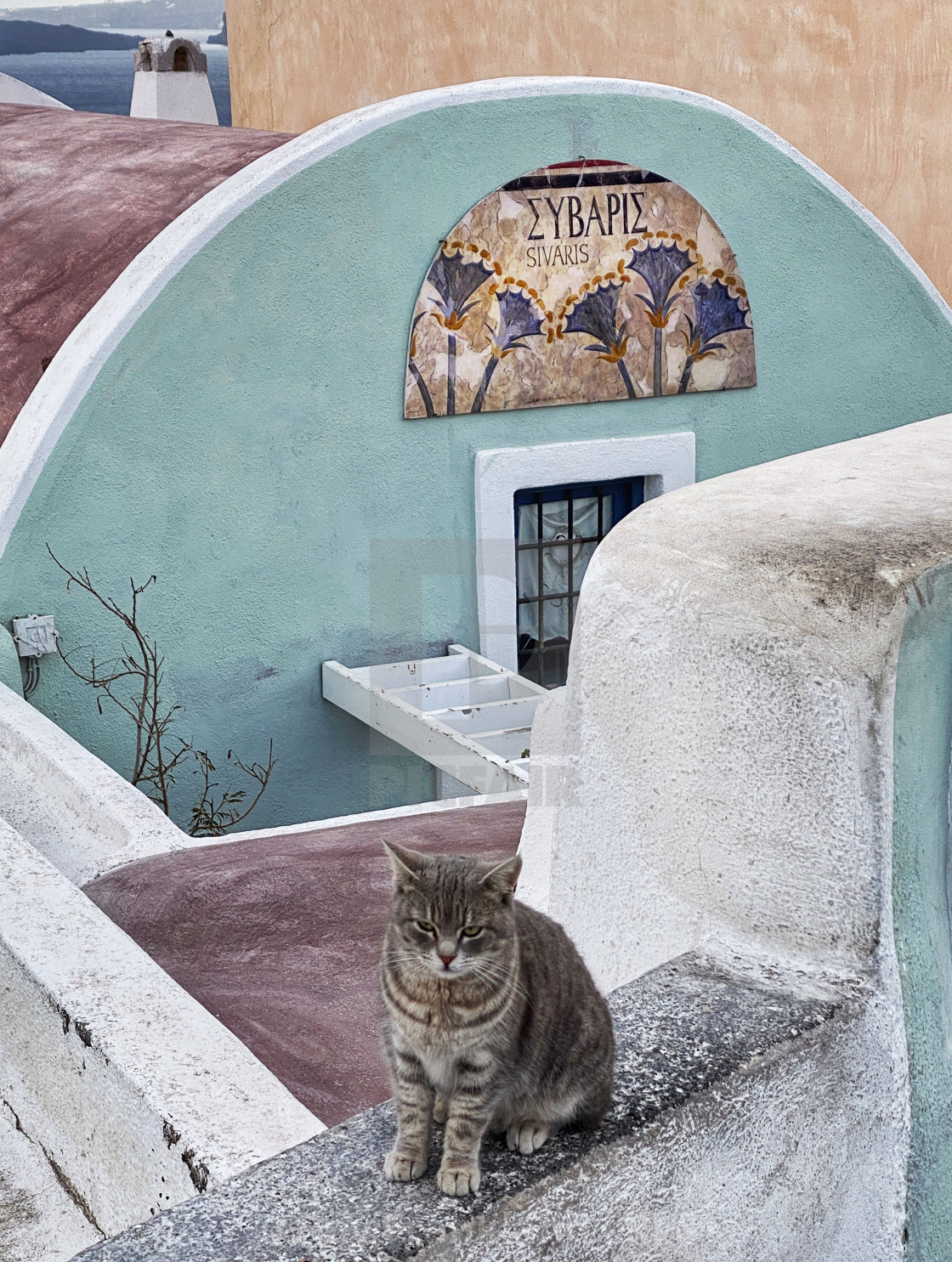 """Cat on a wall in Fira"" stock image"