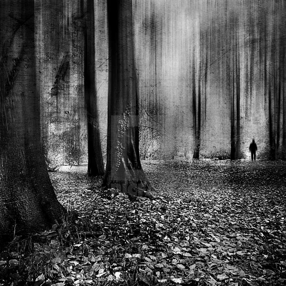 """""""A shadow in the woods"""" stock image"""