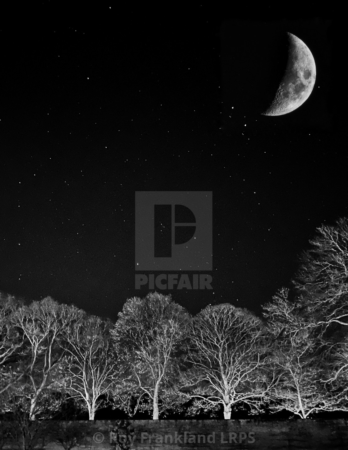"""Moon, stars and trees"" stock image"
