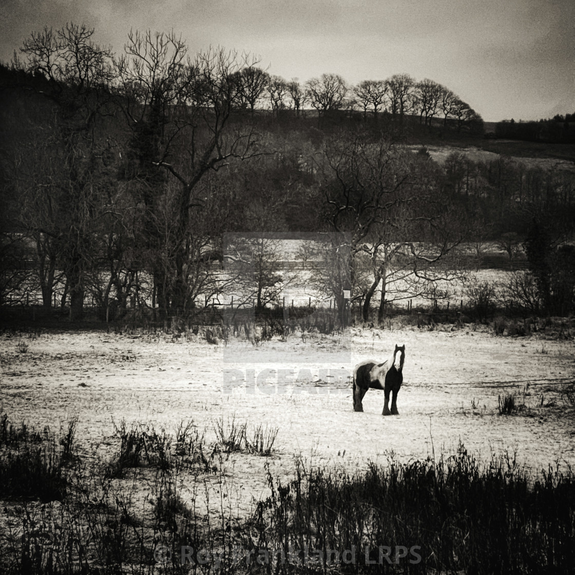 """""""Horse in a field of snow"""" stock image"""