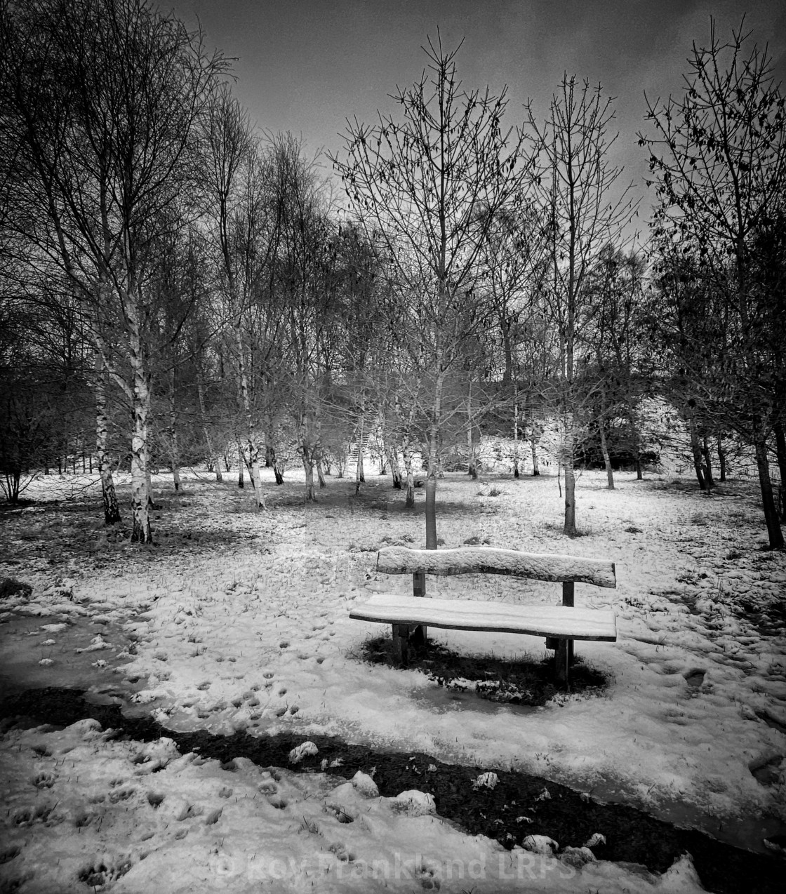 """""""Park bench covered in snow, mono"""" stock image"""