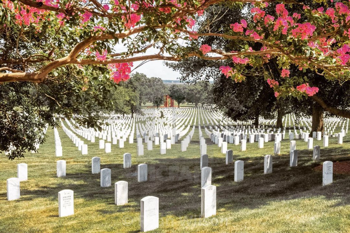 """Summer at Arlington Cemetery"" stock image"