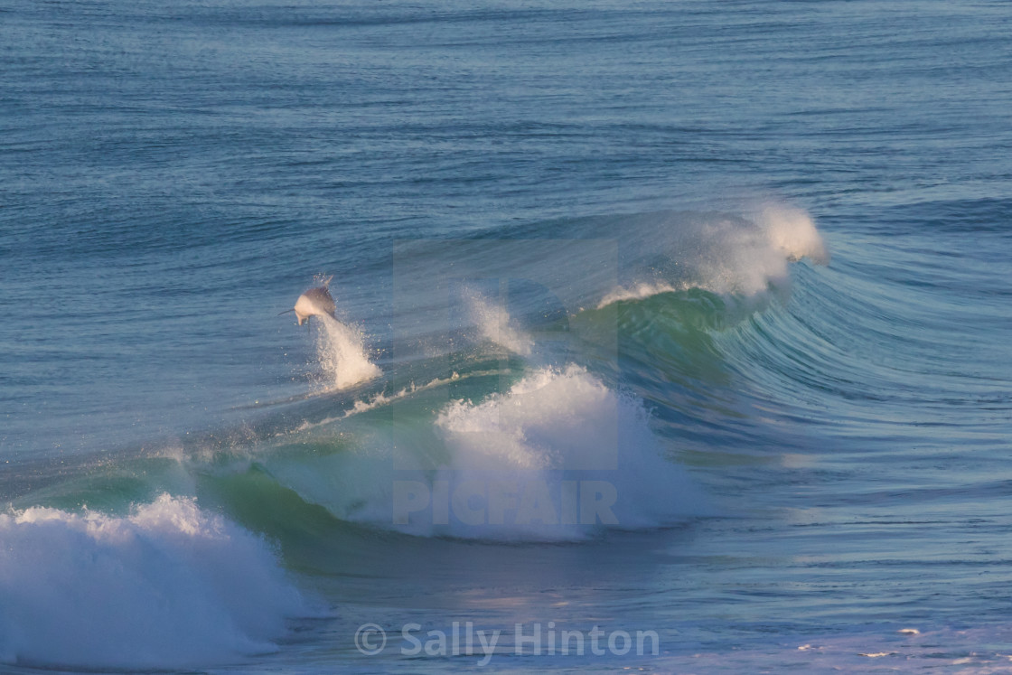 """""""A dolphin leaping out of a wave"""" stock image"""