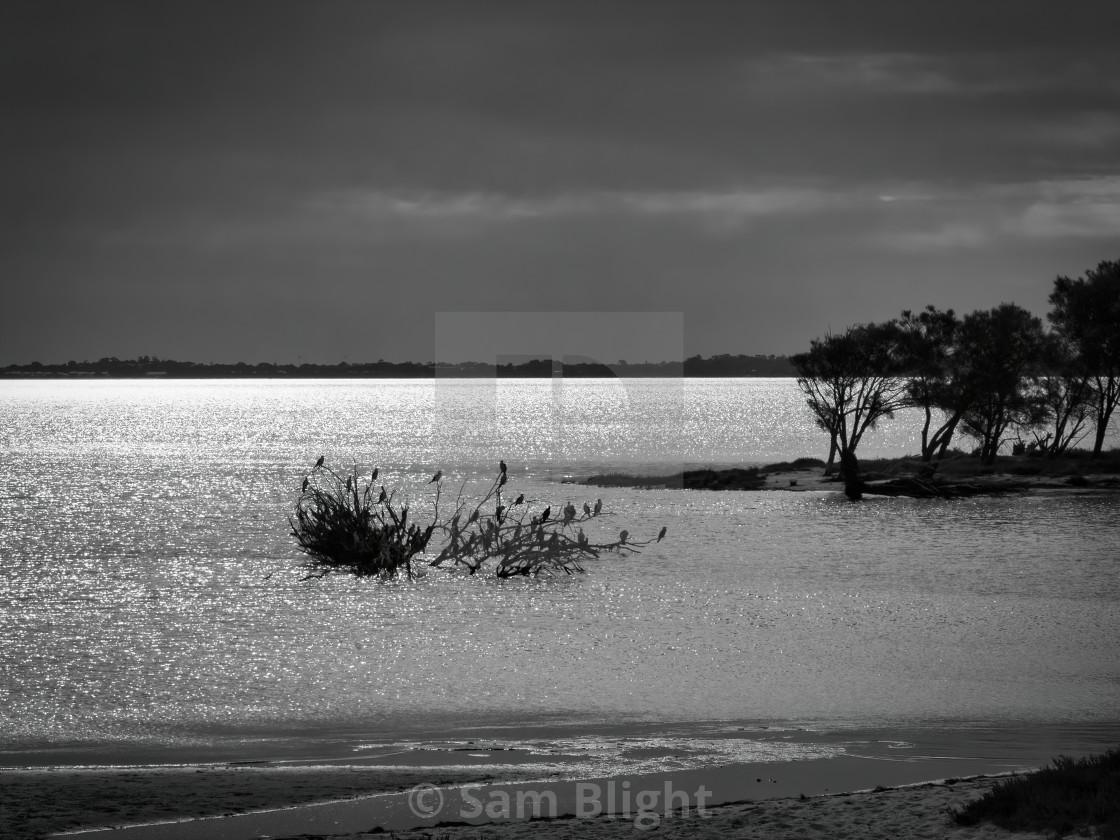 """Shining Water on Inlet"" stock image"