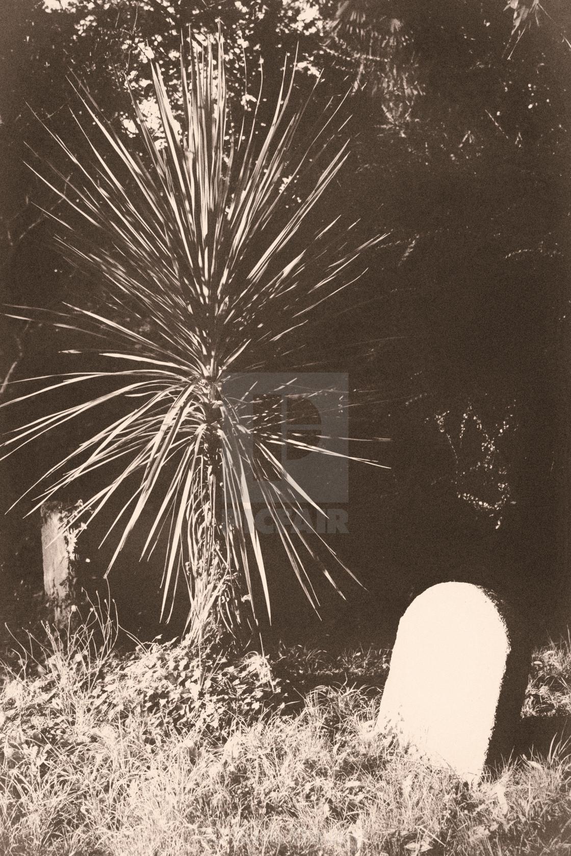 """Palm and Gravestone"" stock image"