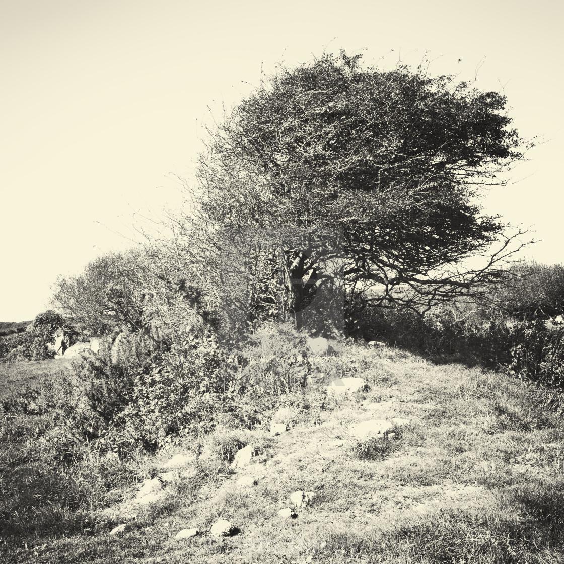 """Rocky windswept west Cornwall"" stock image"
