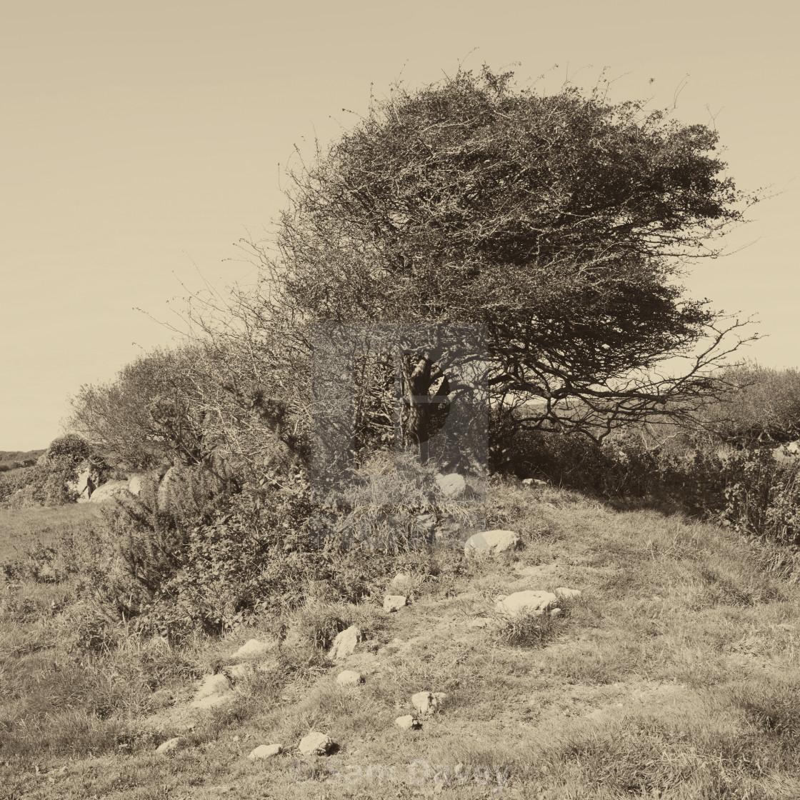 """Tree at Brane"" stock image"
