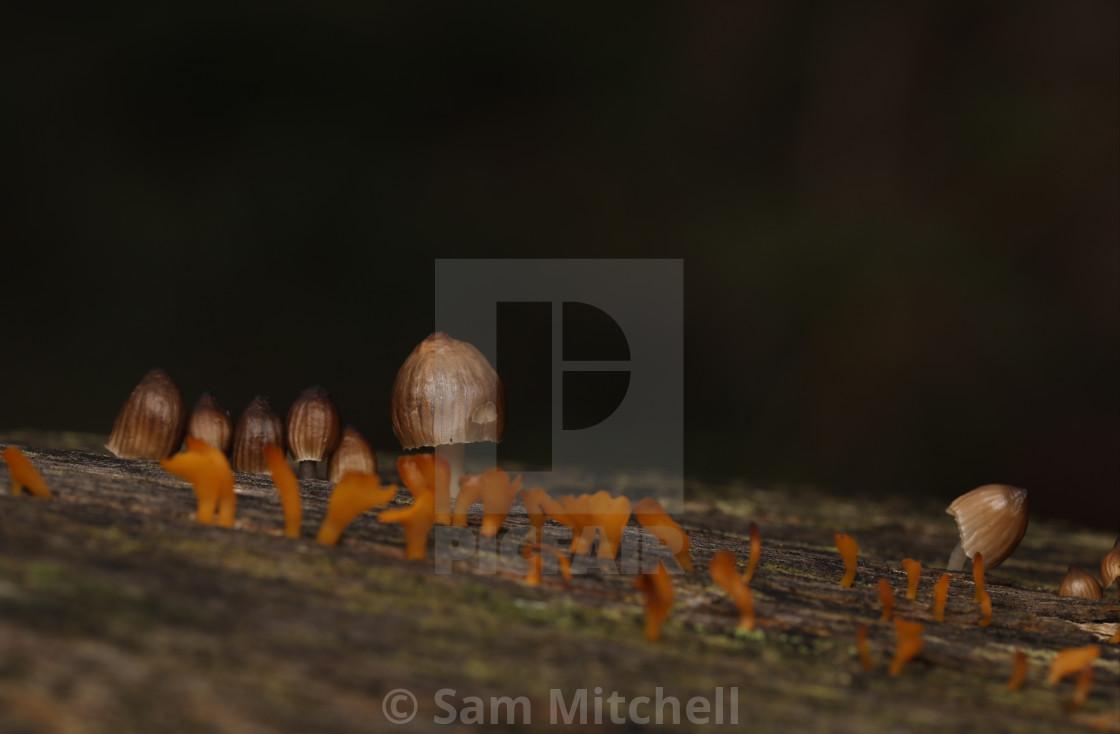 """Tiny Mushrooms"" stock image"