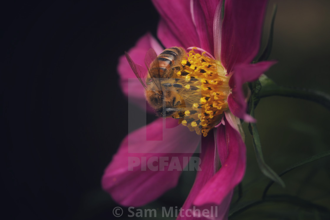 """""""Pretty flower with Bee"""" stock image"""