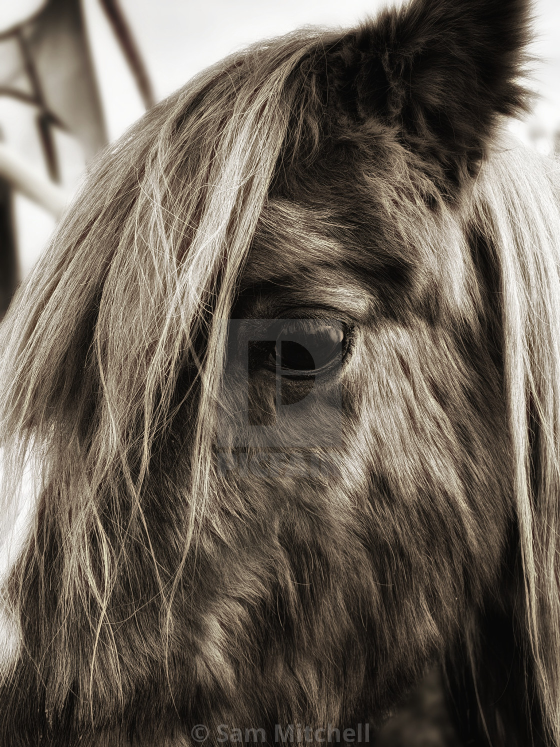 """""""A horses eye is a window to their sole"""" stock image"""