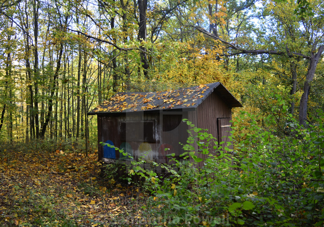 """""""Fall Cabin in the Woods"""" stock image"""