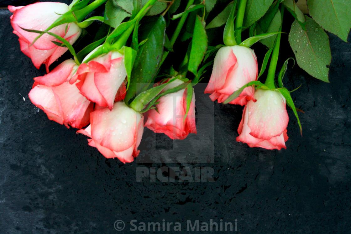 """Rose flowers"" stock image"