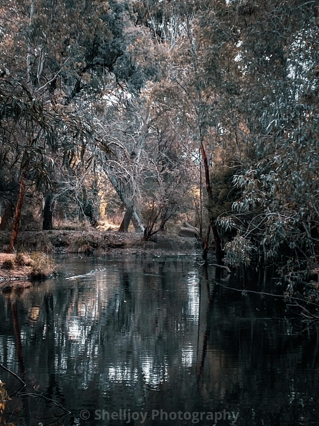 """Dark Pond"" stock image"