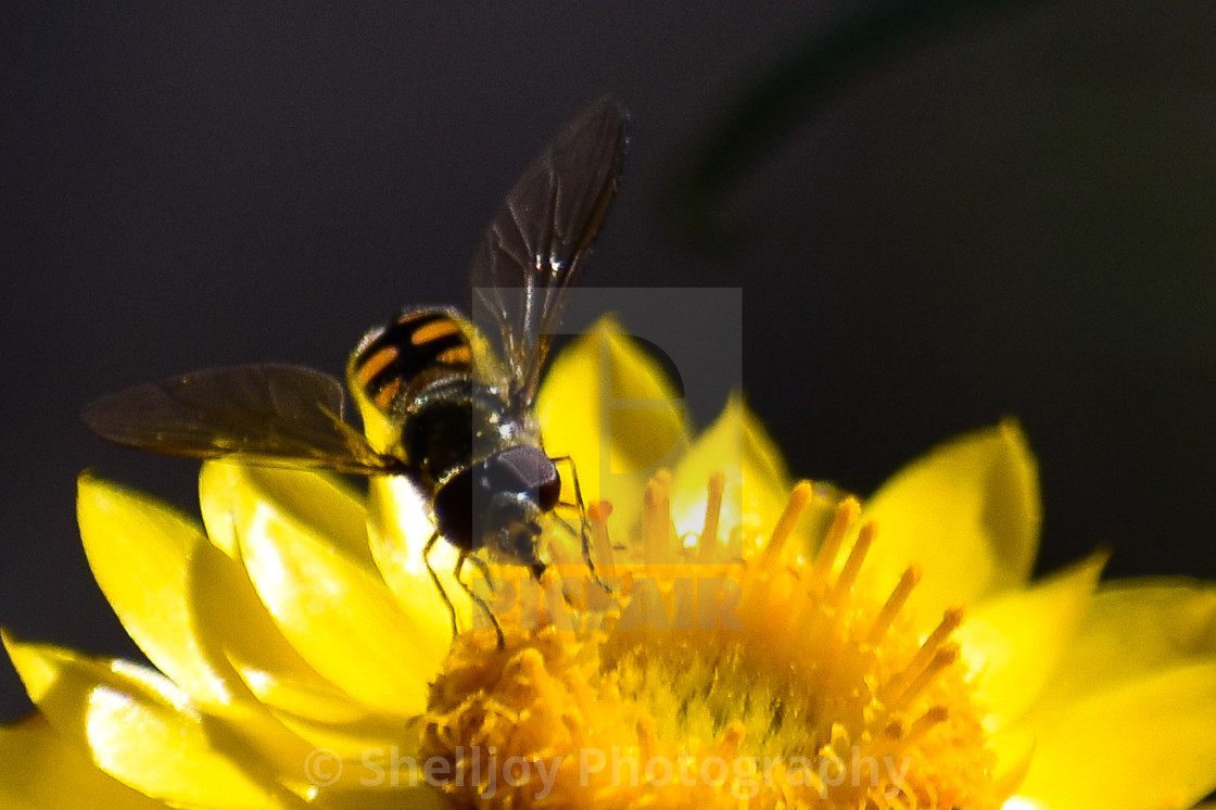 """""""Little Wasp"""" stock image"""