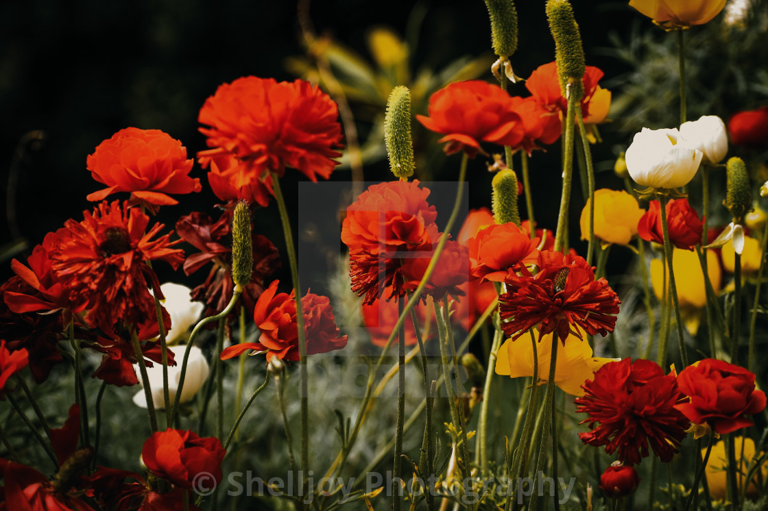 """""""Muted Flowers"""" stock image"""