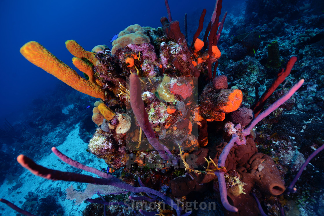 """""""Beautiful coloured coral reef"""" stock image"""