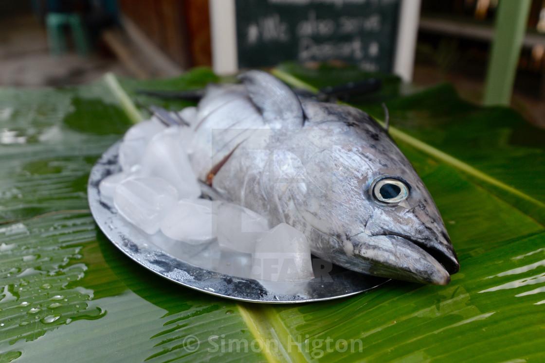 """Tuna as fresh as you like"" stock image"