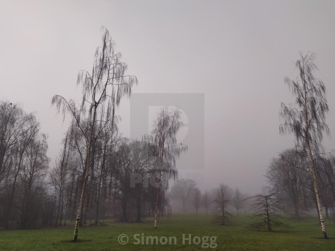 Fog at Chances Park