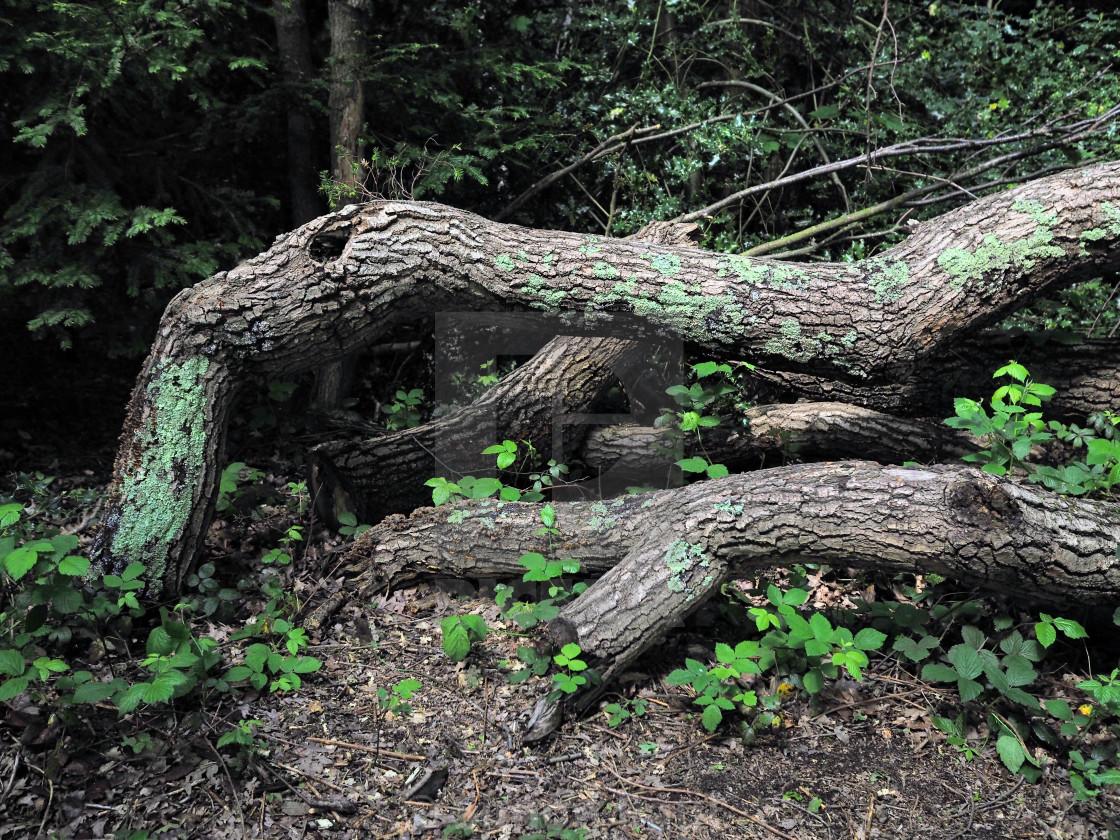 """Dead Wood?"" stock image"