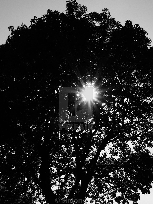 """Eye of the Tree"" stock image"