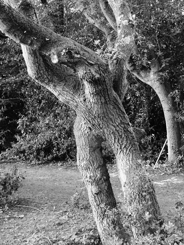 """Human Tree"" stock image"