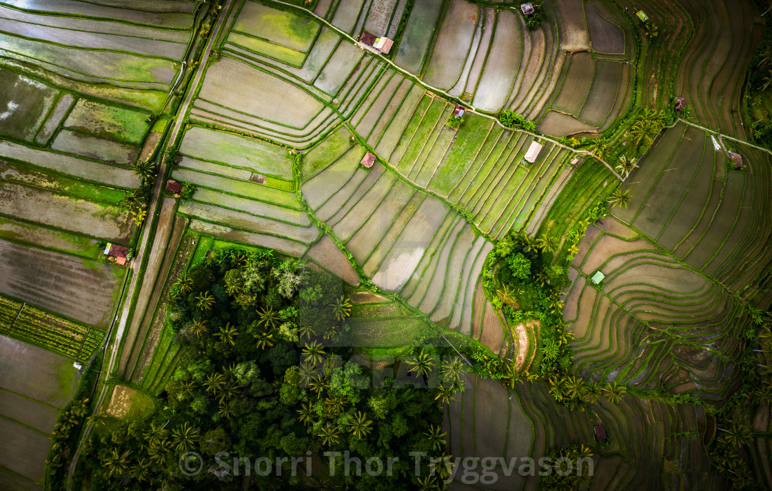 """Jatiluwih Ricefields - Bali"" stock image"