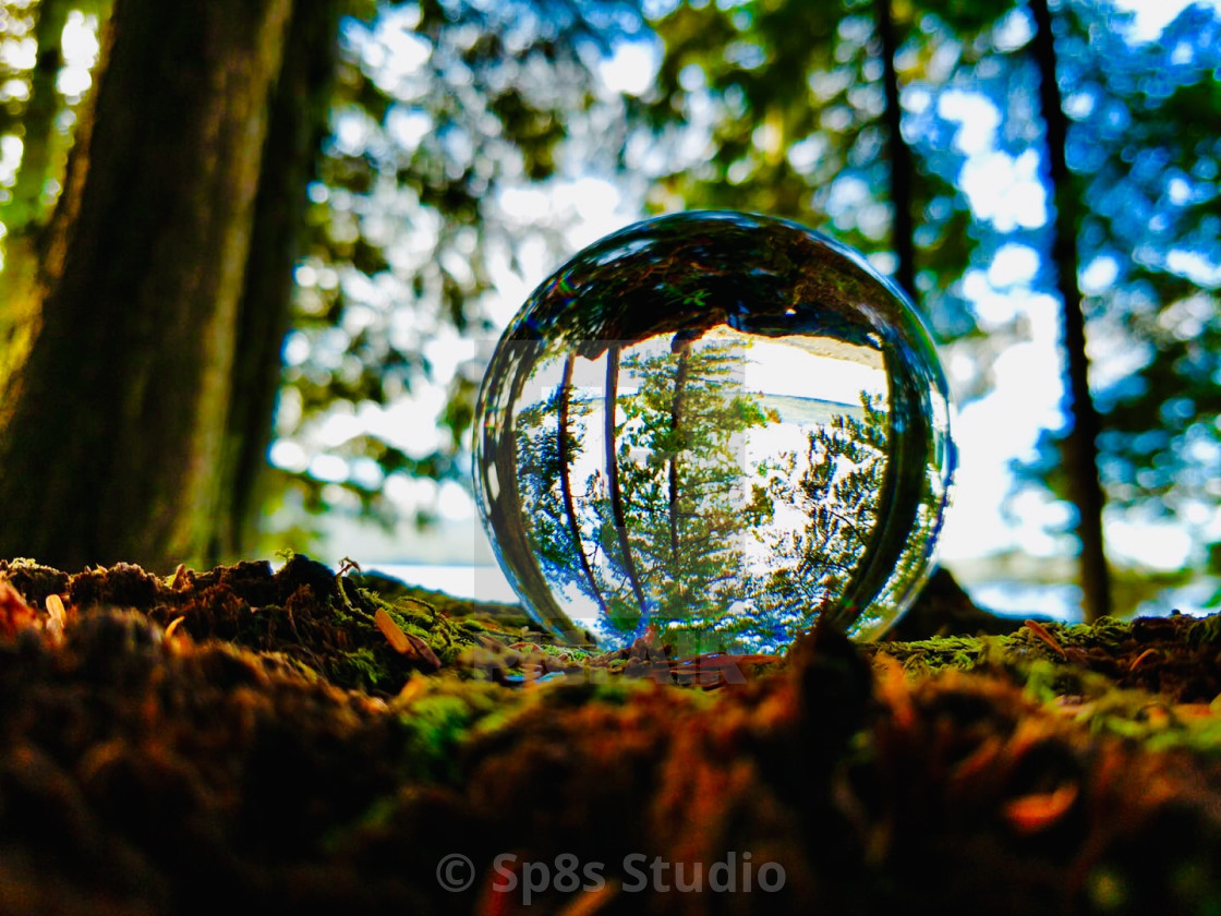 """""""Crystal Ball Forest"""" stock image"""